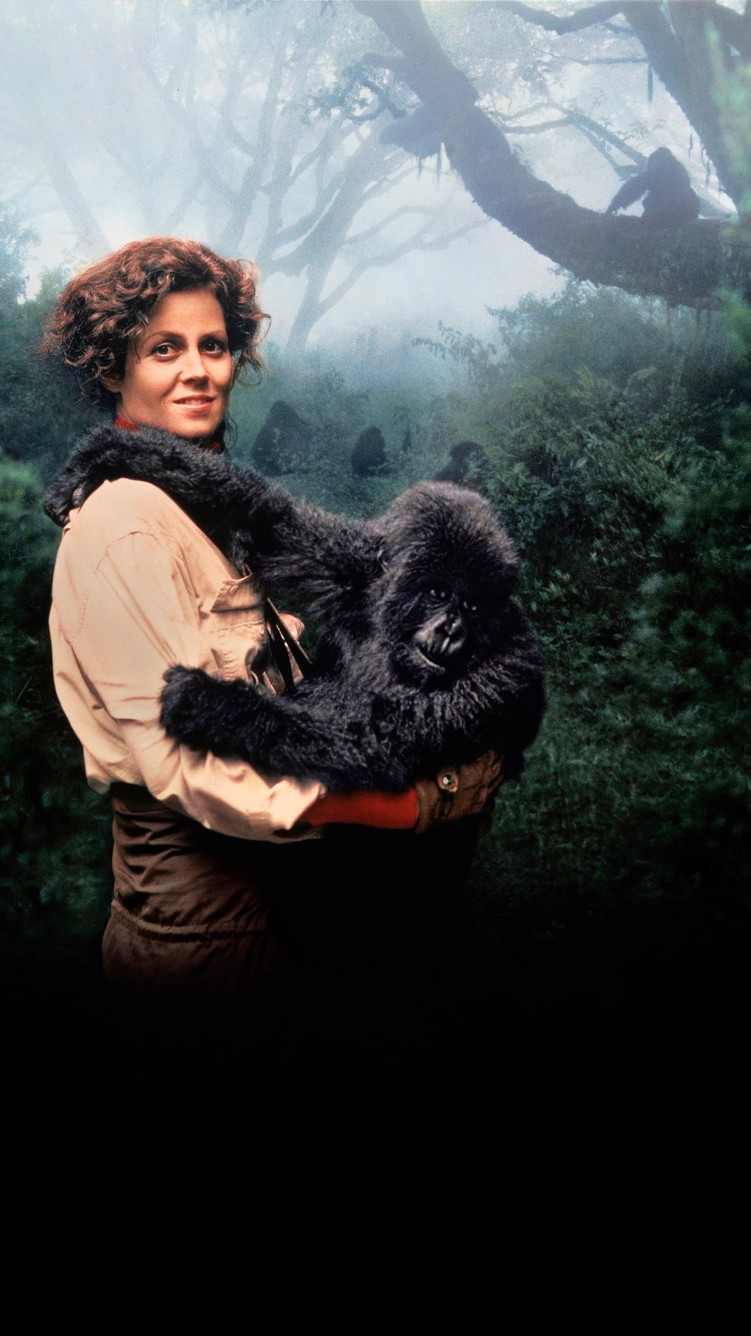 "Wallpaper for ""Gorillas in the Mist"" (1988)"