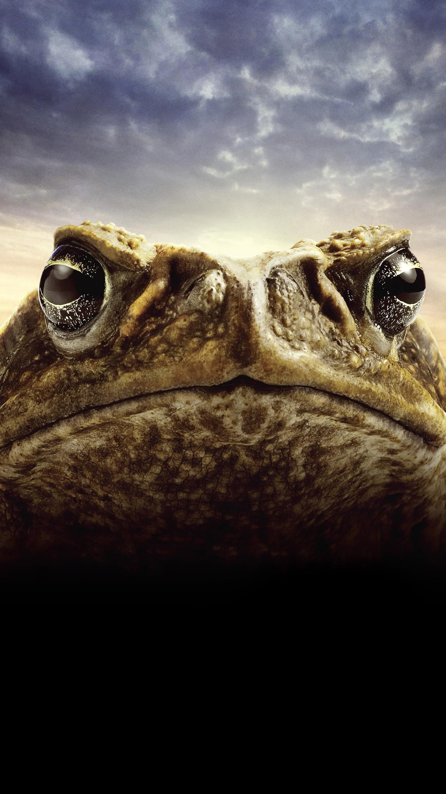 "Wallpaper for ""Cane Toads: The Conquest"" (2010)"